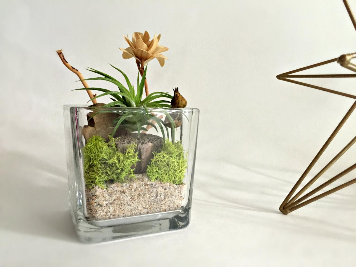 Cube Glass Vase Air Plant Terrarium Living Decor Diy Kit