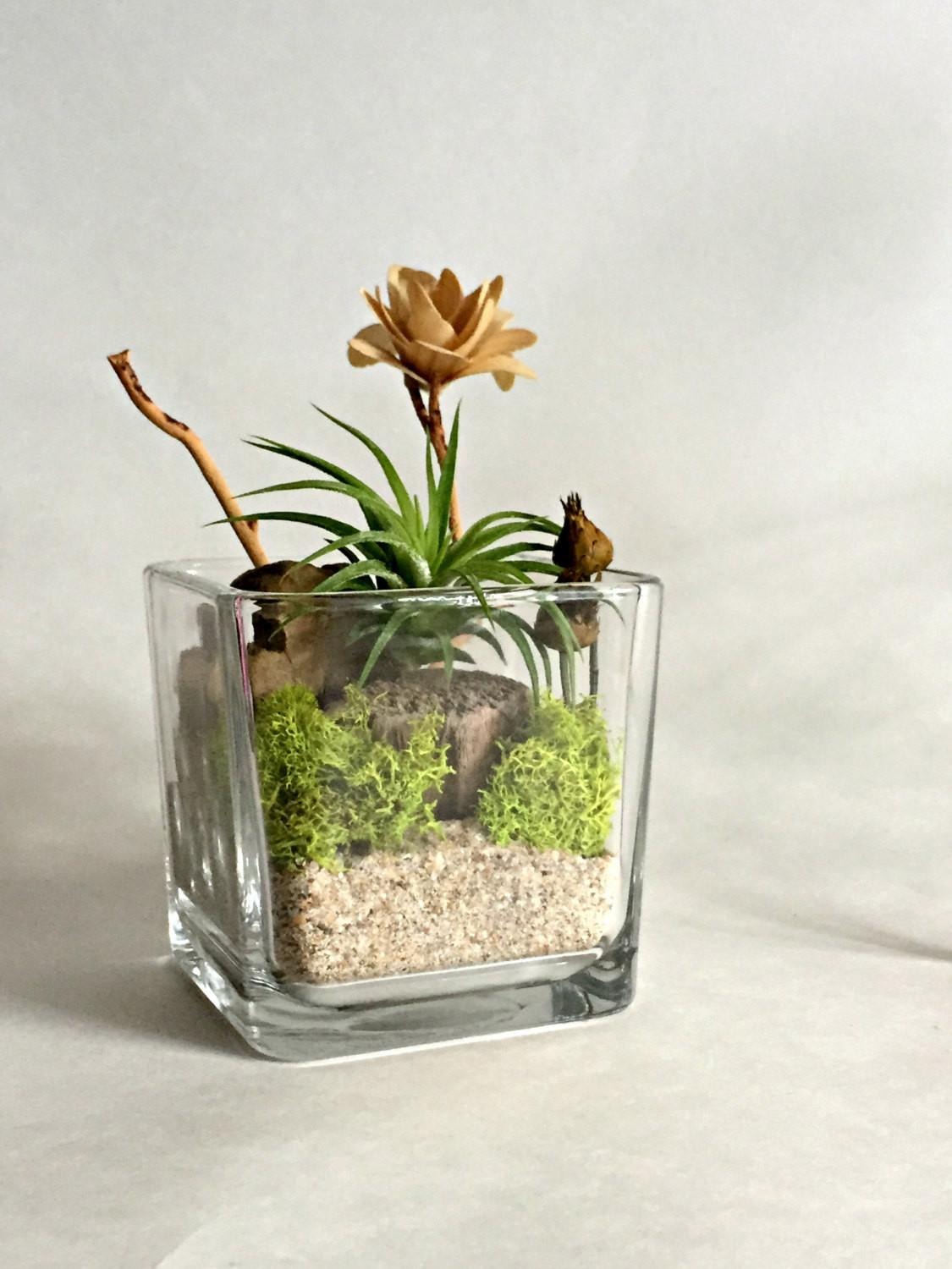 Cube Glass Vase Air Plant Terrarium Living Omorfigiadesigns