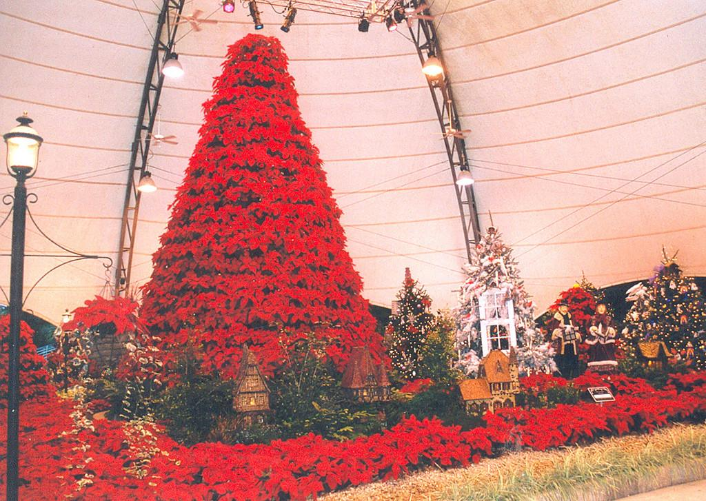 Cypress Gardens Poinsettia Christmas Tree