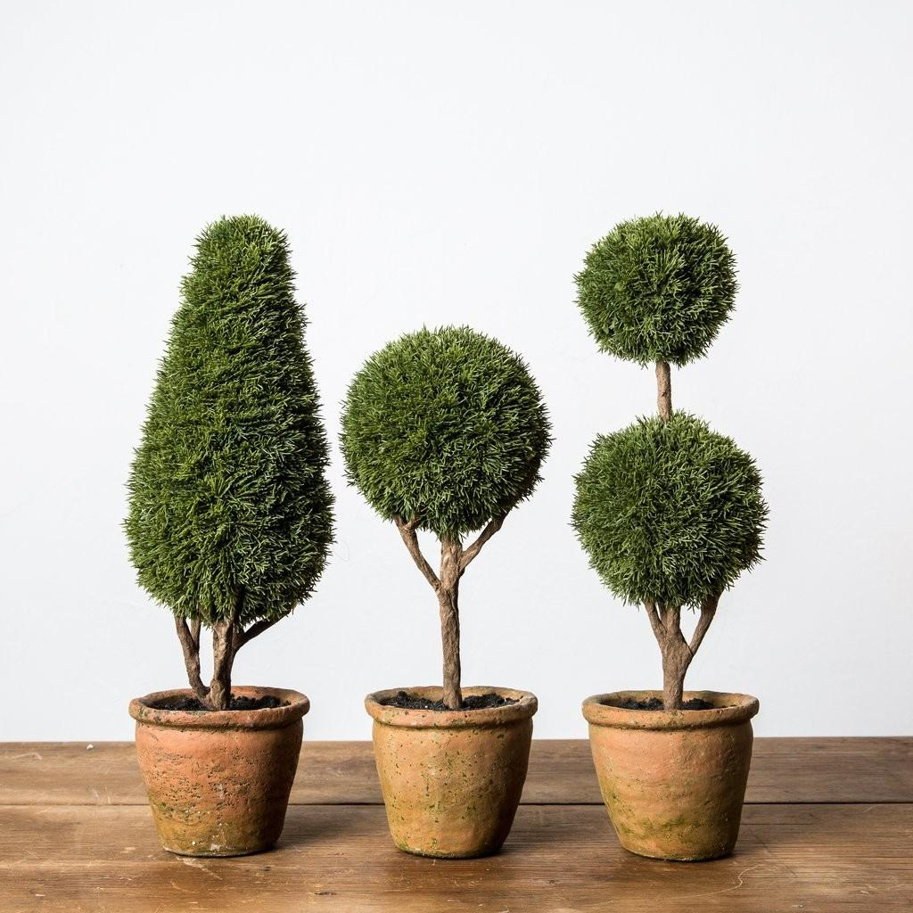 Cypress Topiary Magnolia Chip Joanna Gaines