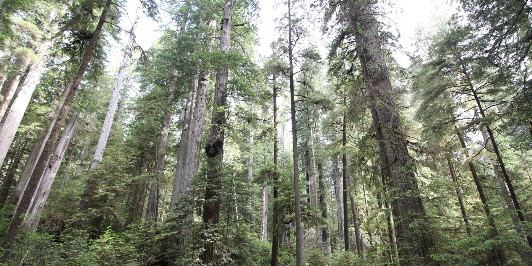 Day Itinerary Redwood National State Parks