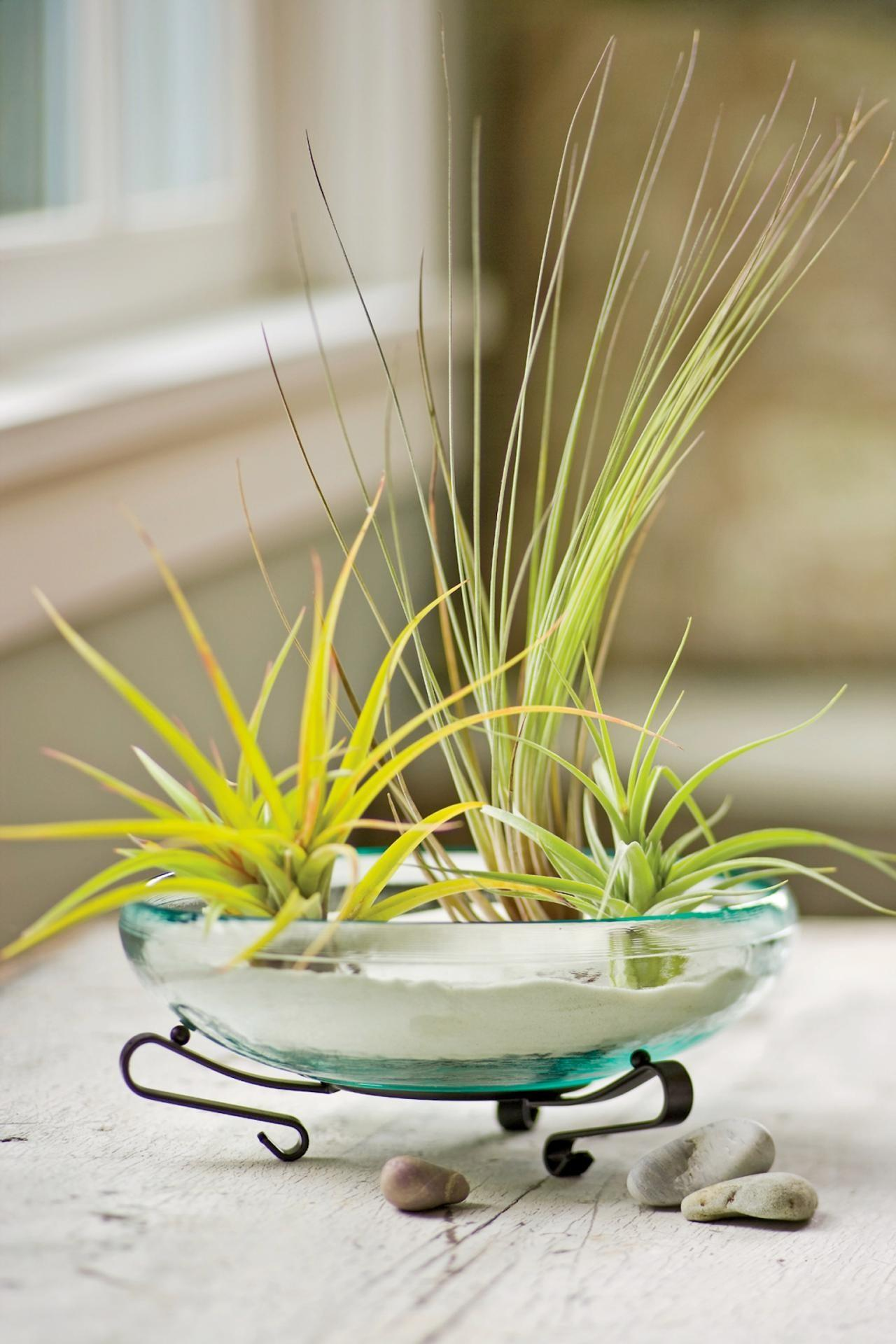 Decorate Air Plants