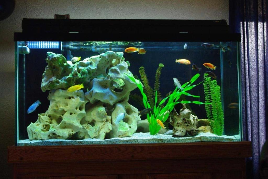Decorating Your Fish Tank Beautiful Design Ideas