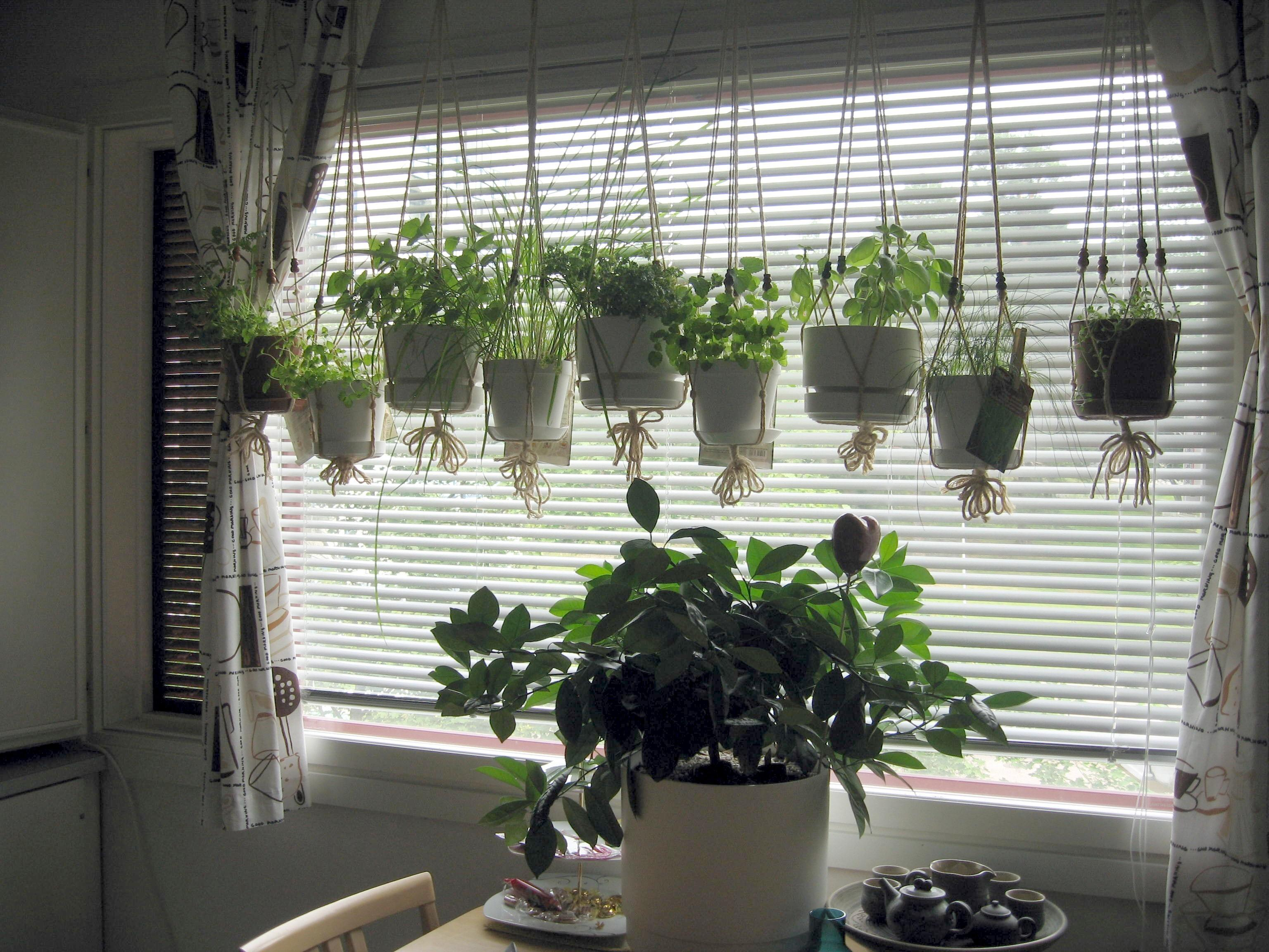 Decorations Hydroponic Hanging Window Garden