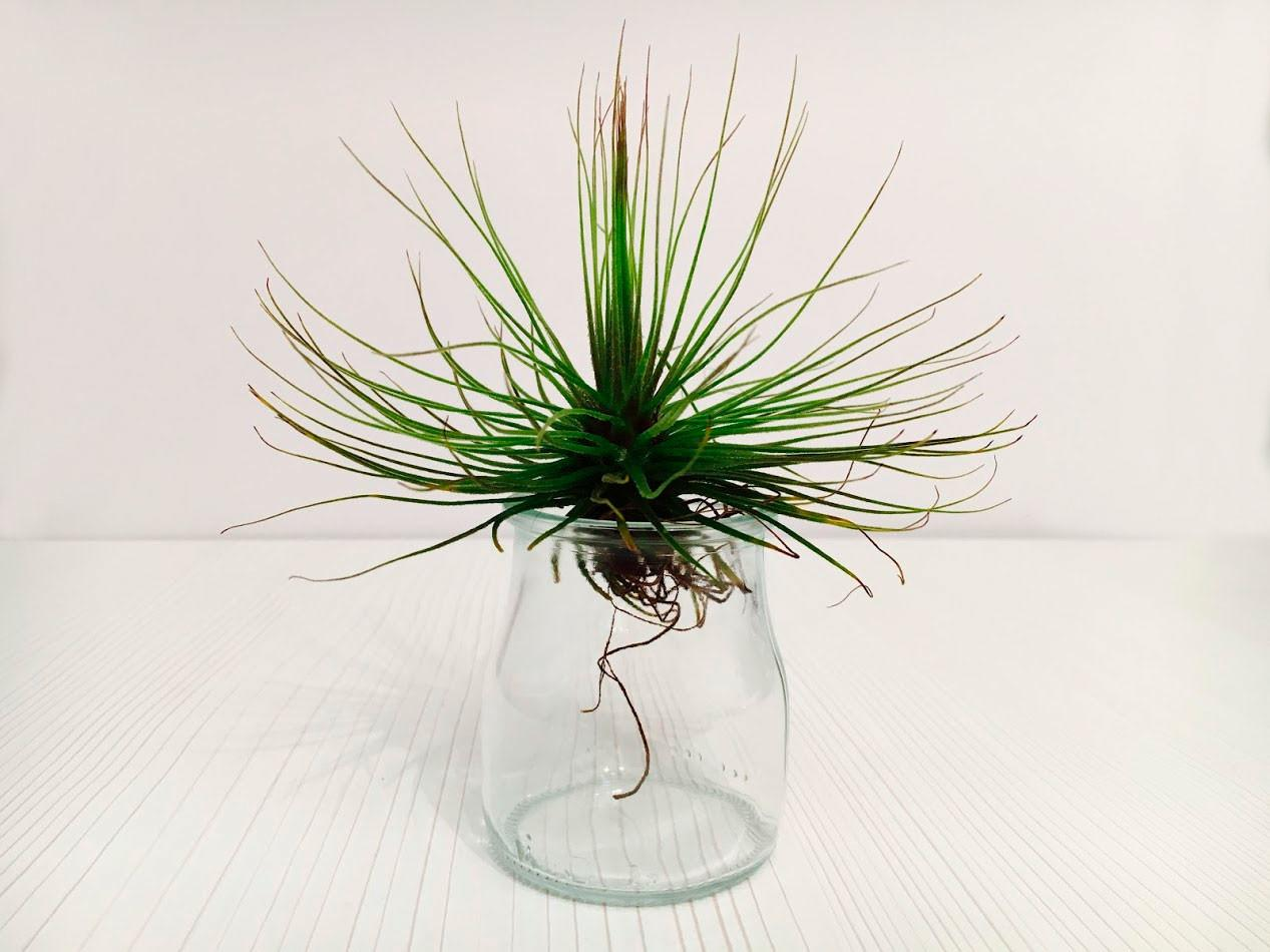 Dekair Blog Air Plants Care Tips New Product Info