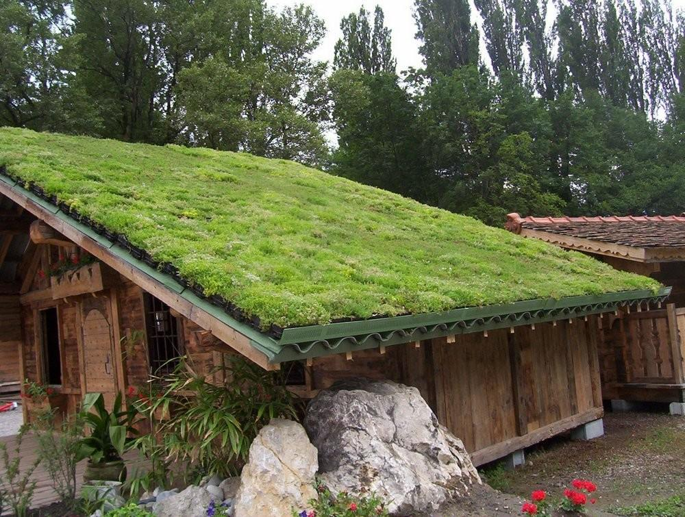 Didn Know Green Roofs Conscious Living