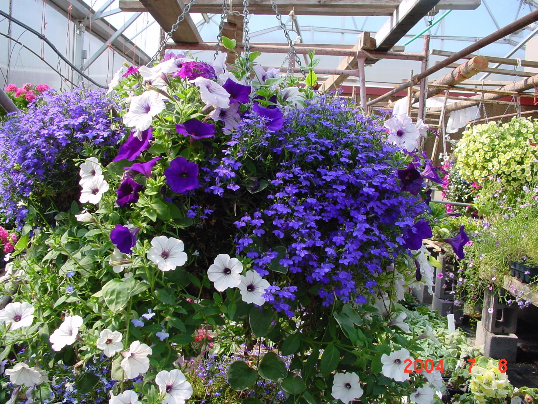 Discover Beauty Hanging Flower Baskets Container