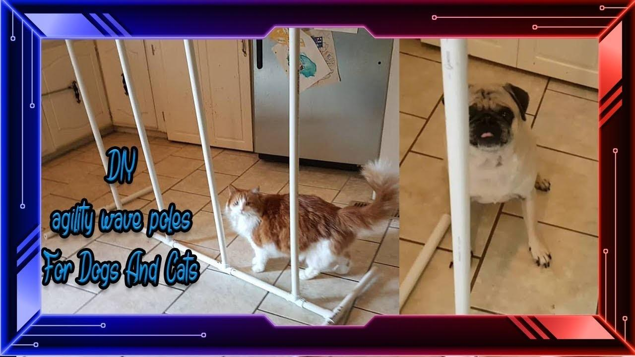 Diy Agility Weave Poles Dogs Cats Funnycat