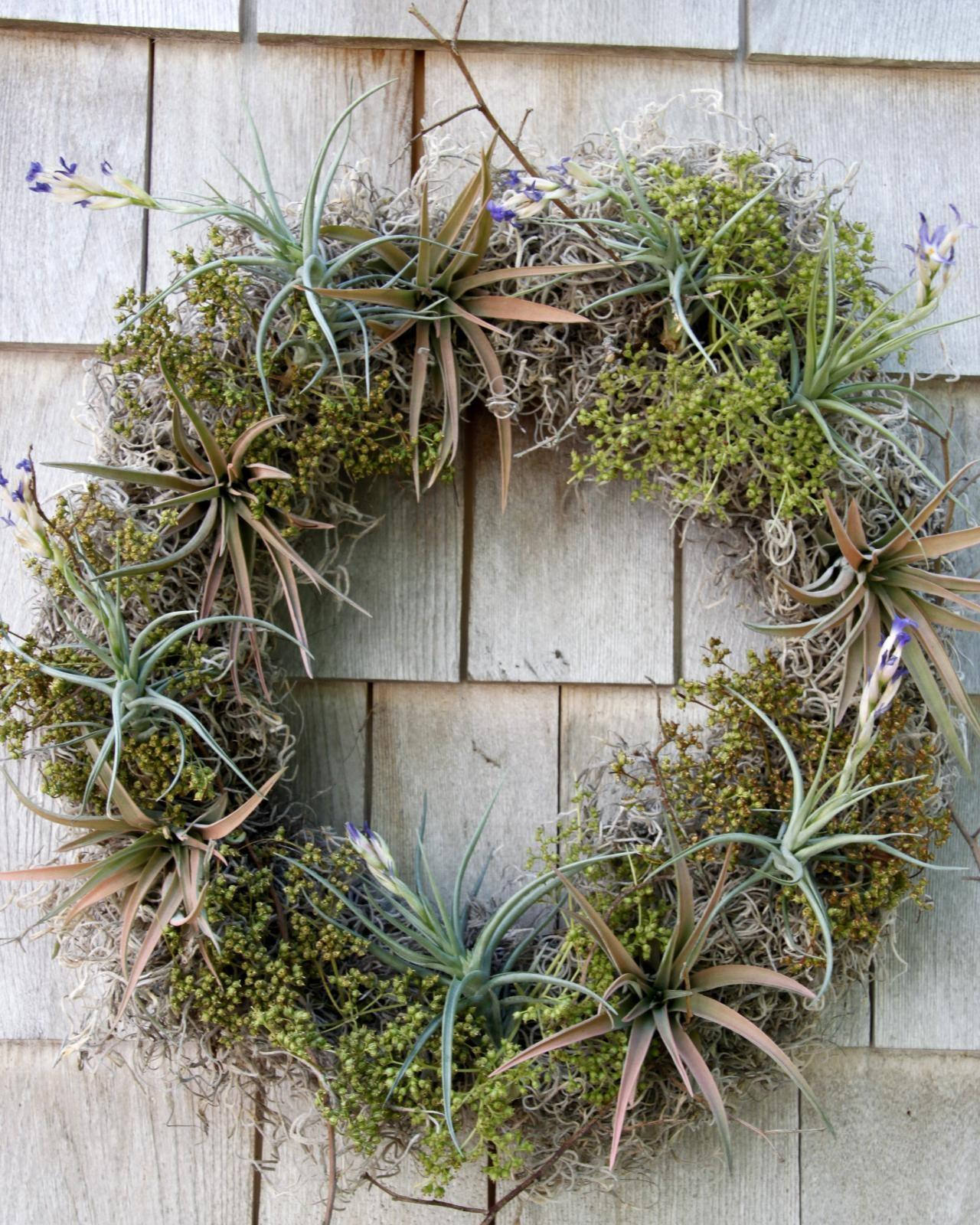 Diy Airplant Wreath