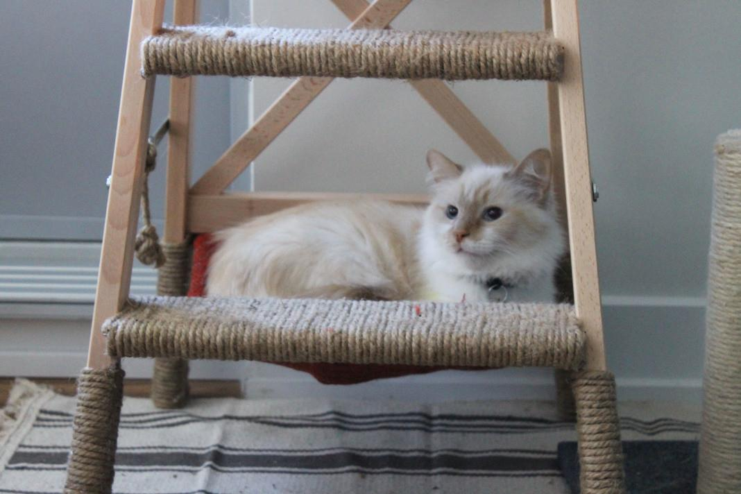 Diy Cat Tree Hammock Hackers