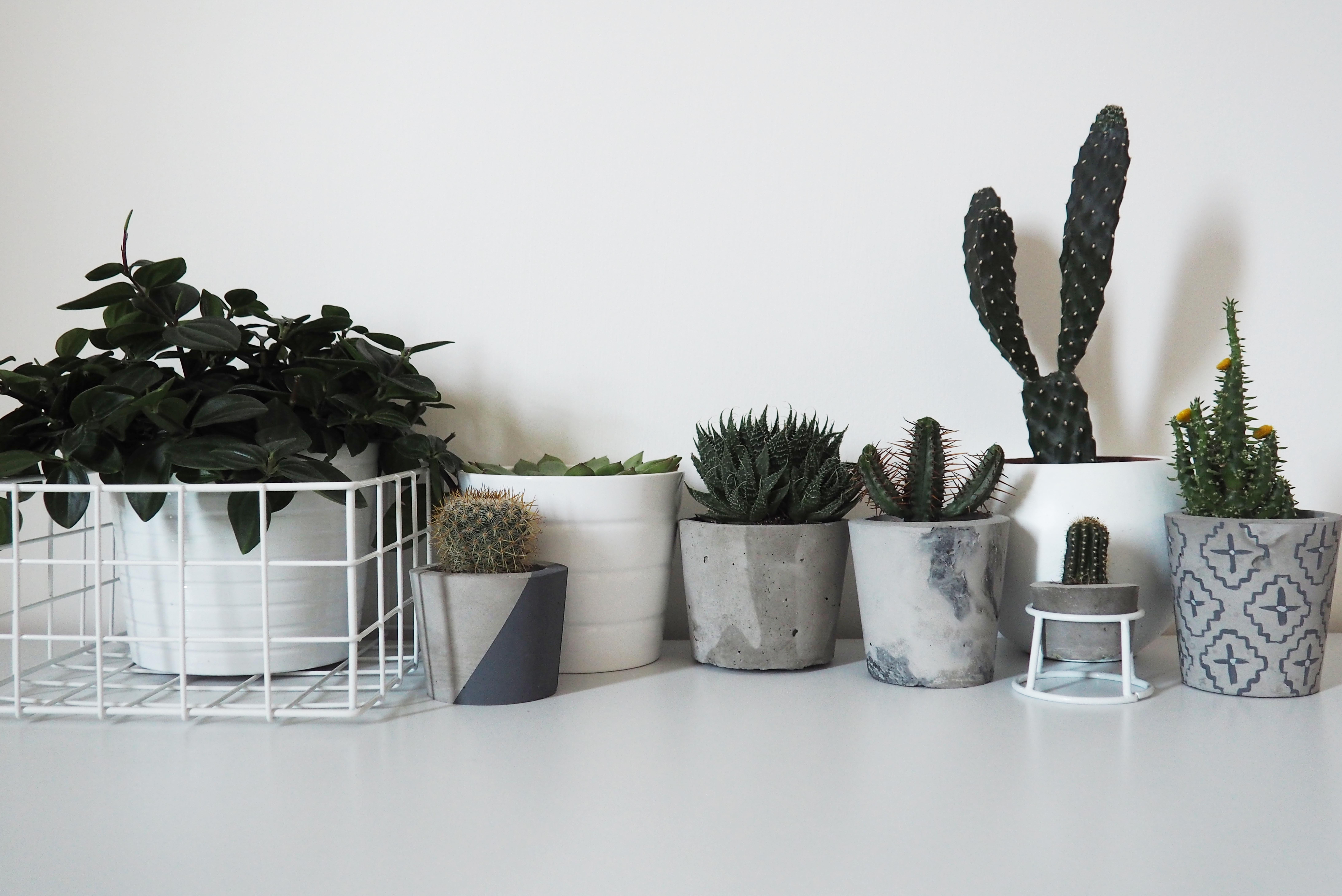Diy Cement Plant Pots Projects