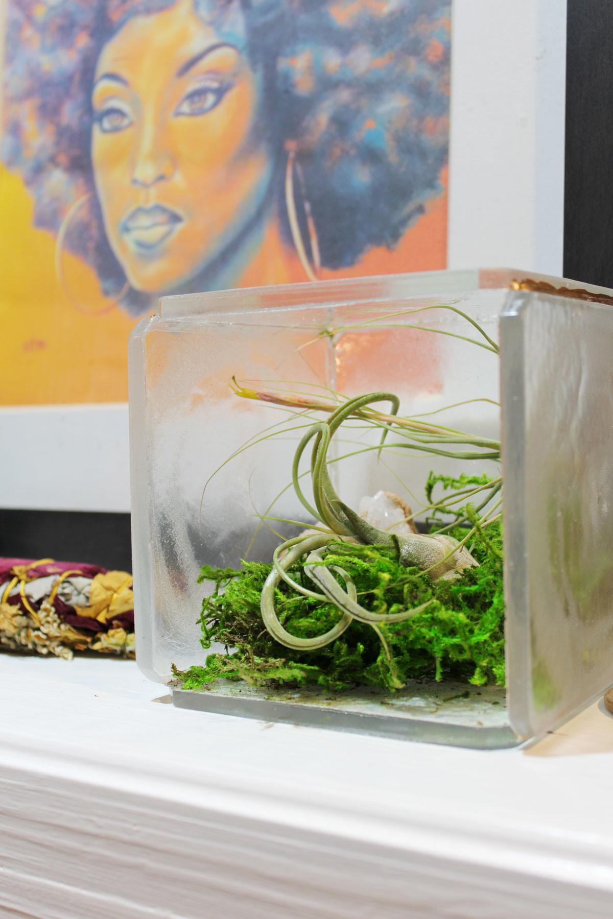 Diy Clear Resin Terrarium Tutorial Displaying Air Plants