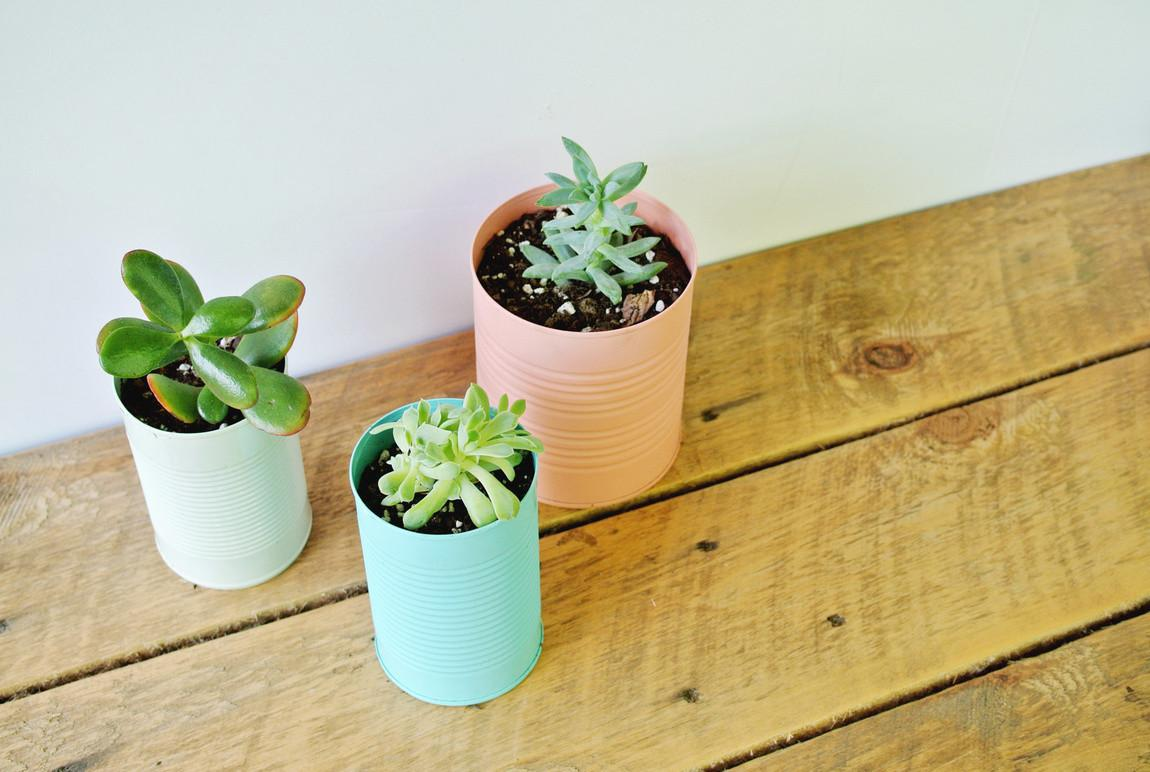 Diy Colorful Tin Can Planters Farm Fresh Therapy
