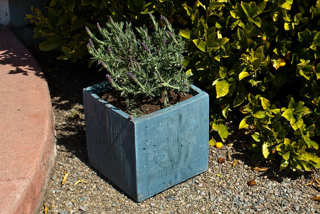 Diy Concrete Planter Box