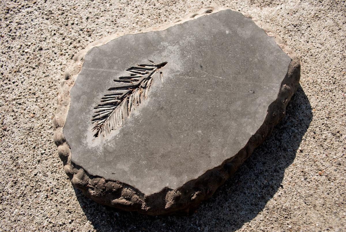 Diy Concrete Stepping Stone Fossil
