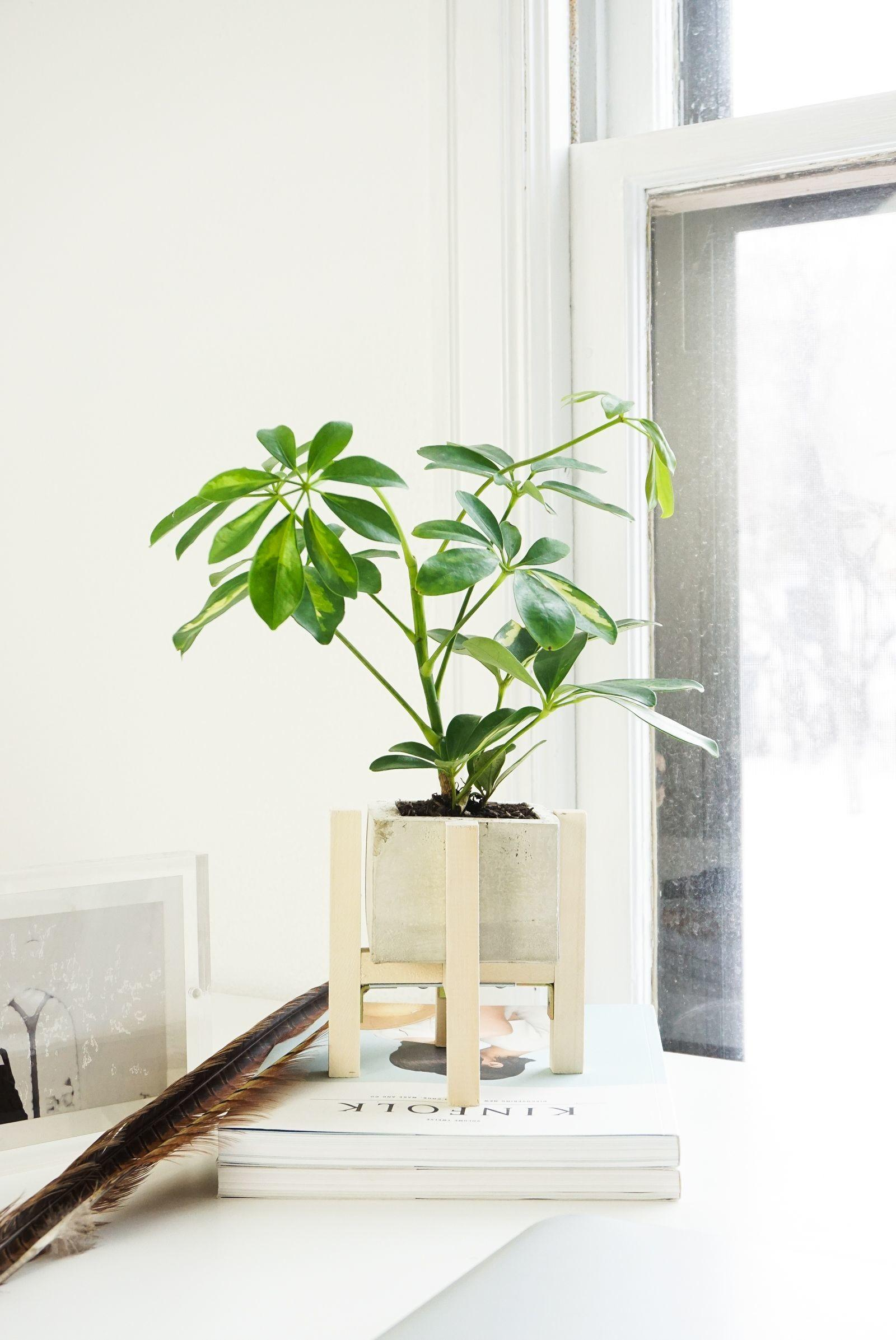 Diy Concrete Wood Planter Stand