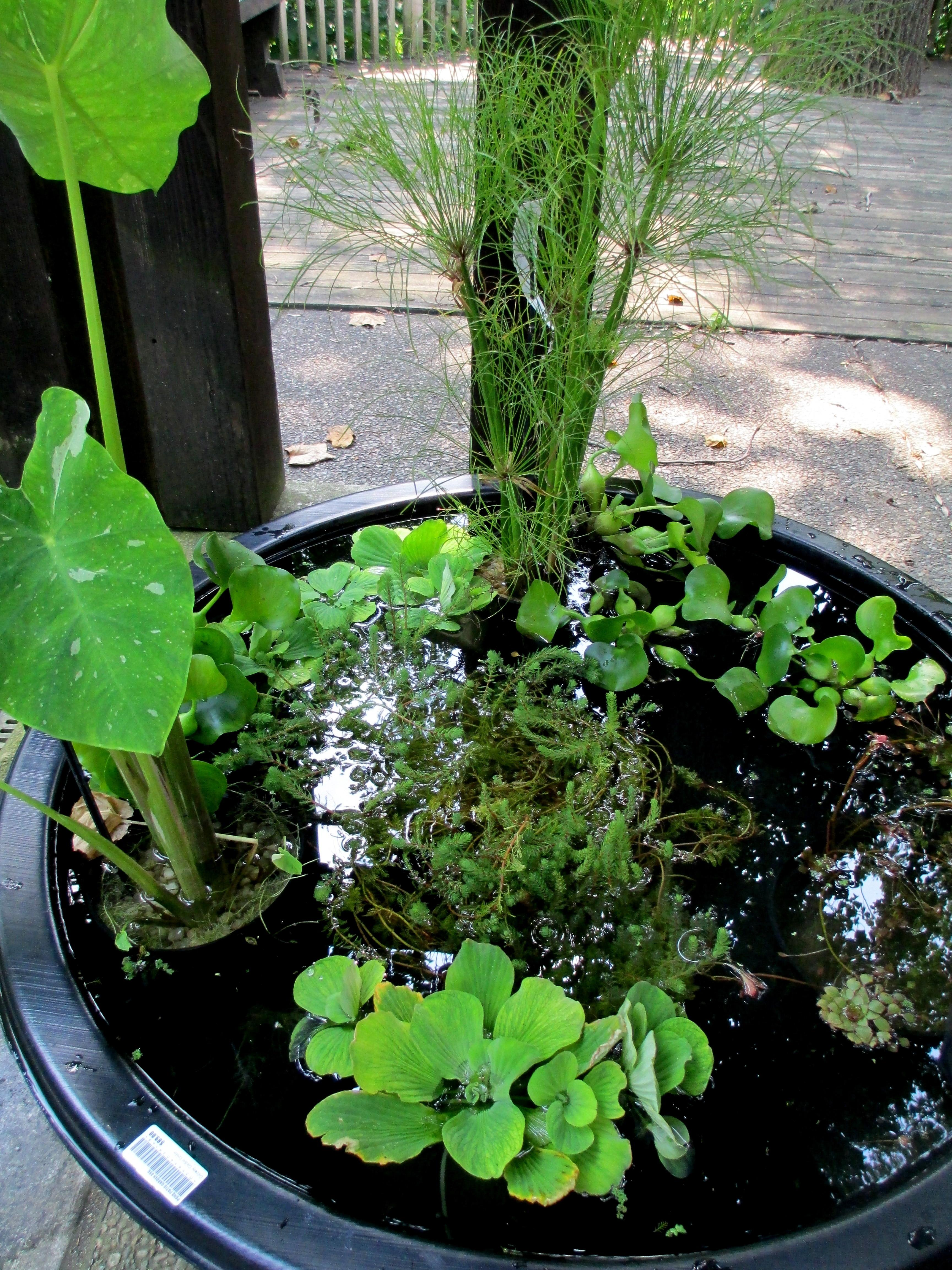 Diy Create Your Own Water Garden Container Our