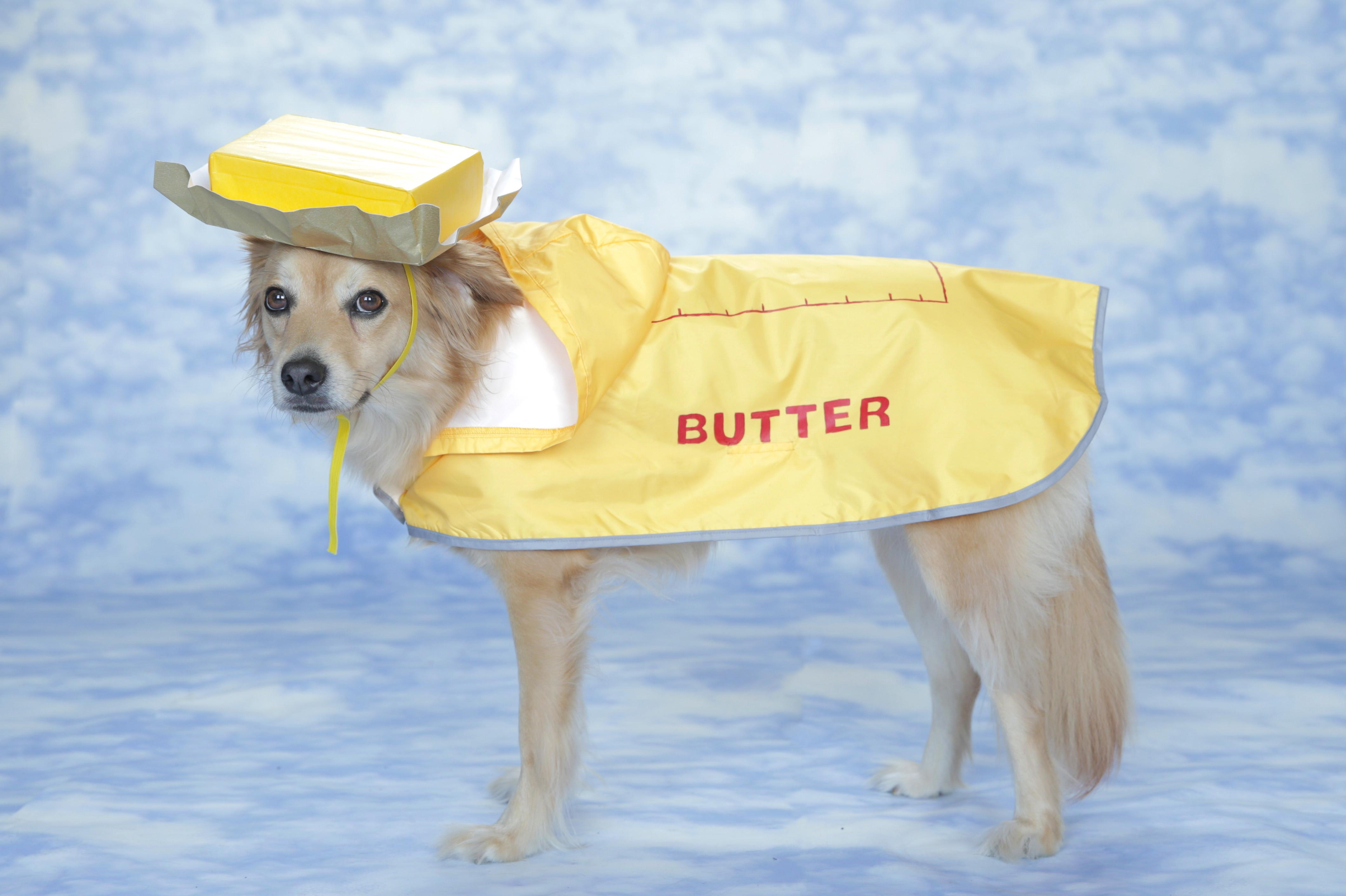 Diy Easy Butter Costume Dogs