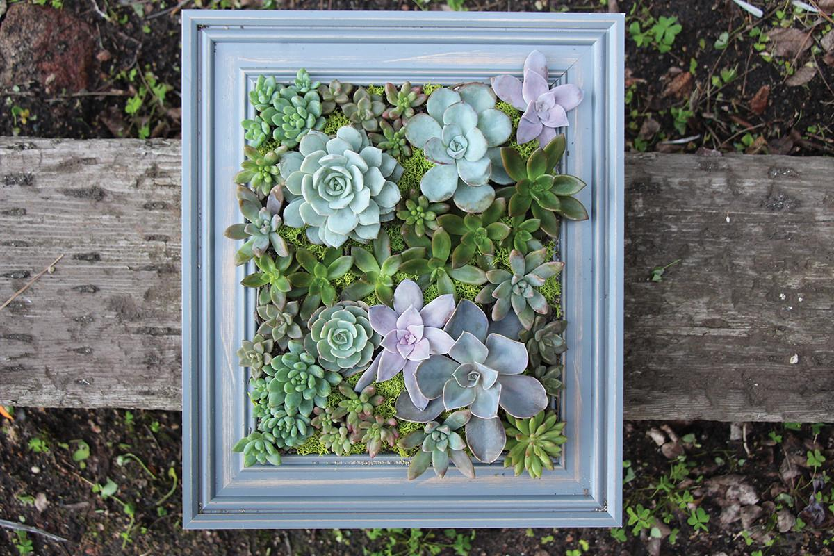 Diy Framed Succulent Wall Planter Yourself