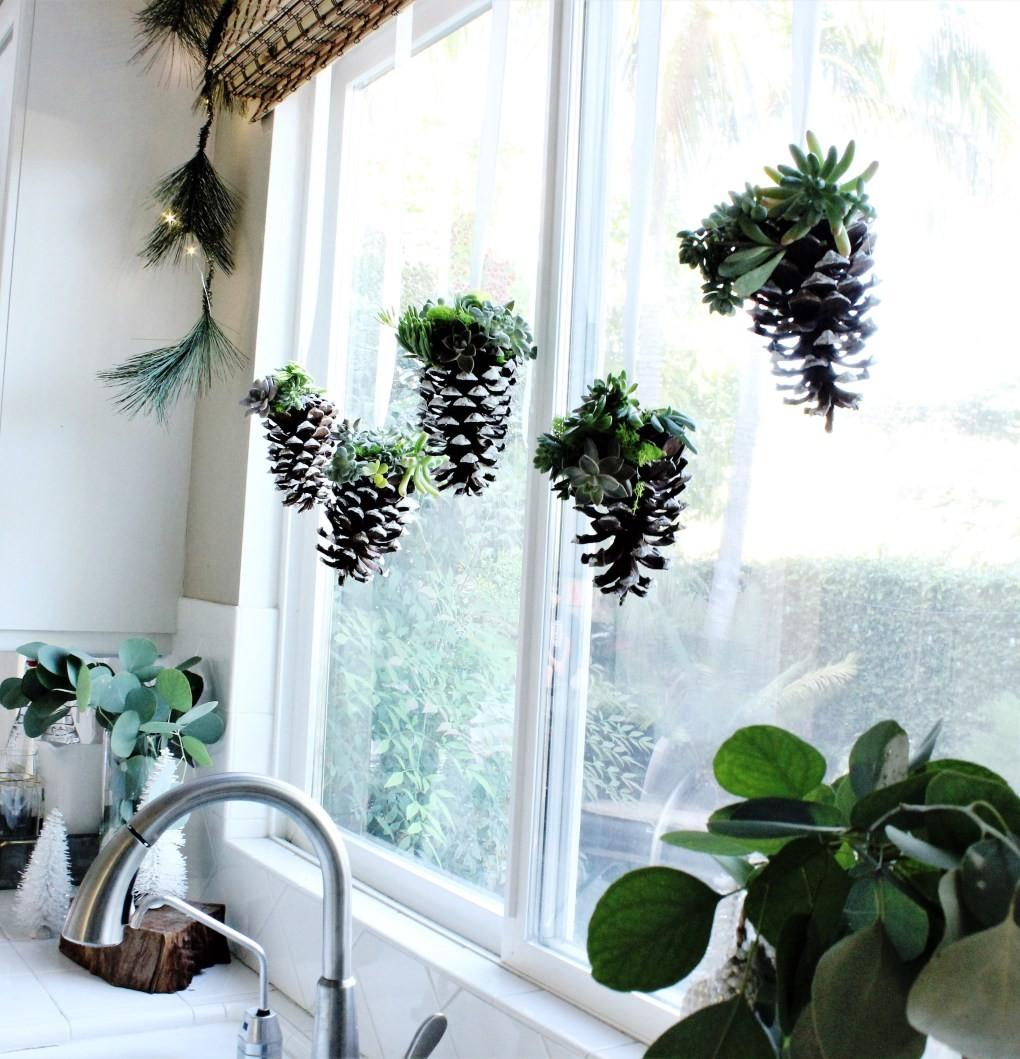 Diy Hanging Pinecone Succulents Meaningful Spaces