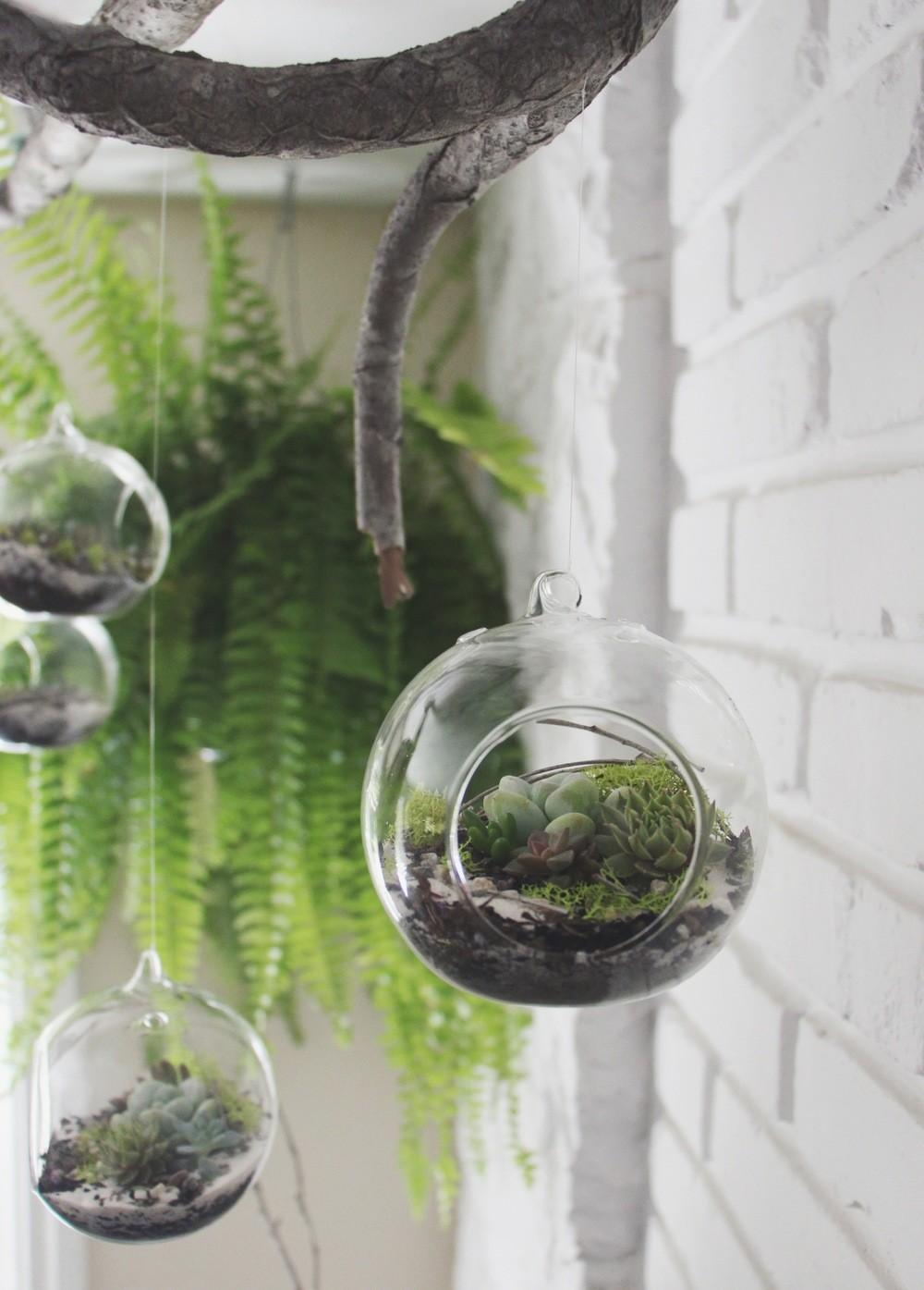 Diy Hanging Succulent Terrarium Needles Leaves