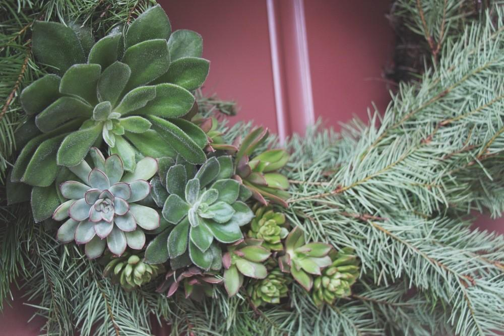 Diy Living Christmas Wreath Succulents Needles Leaves