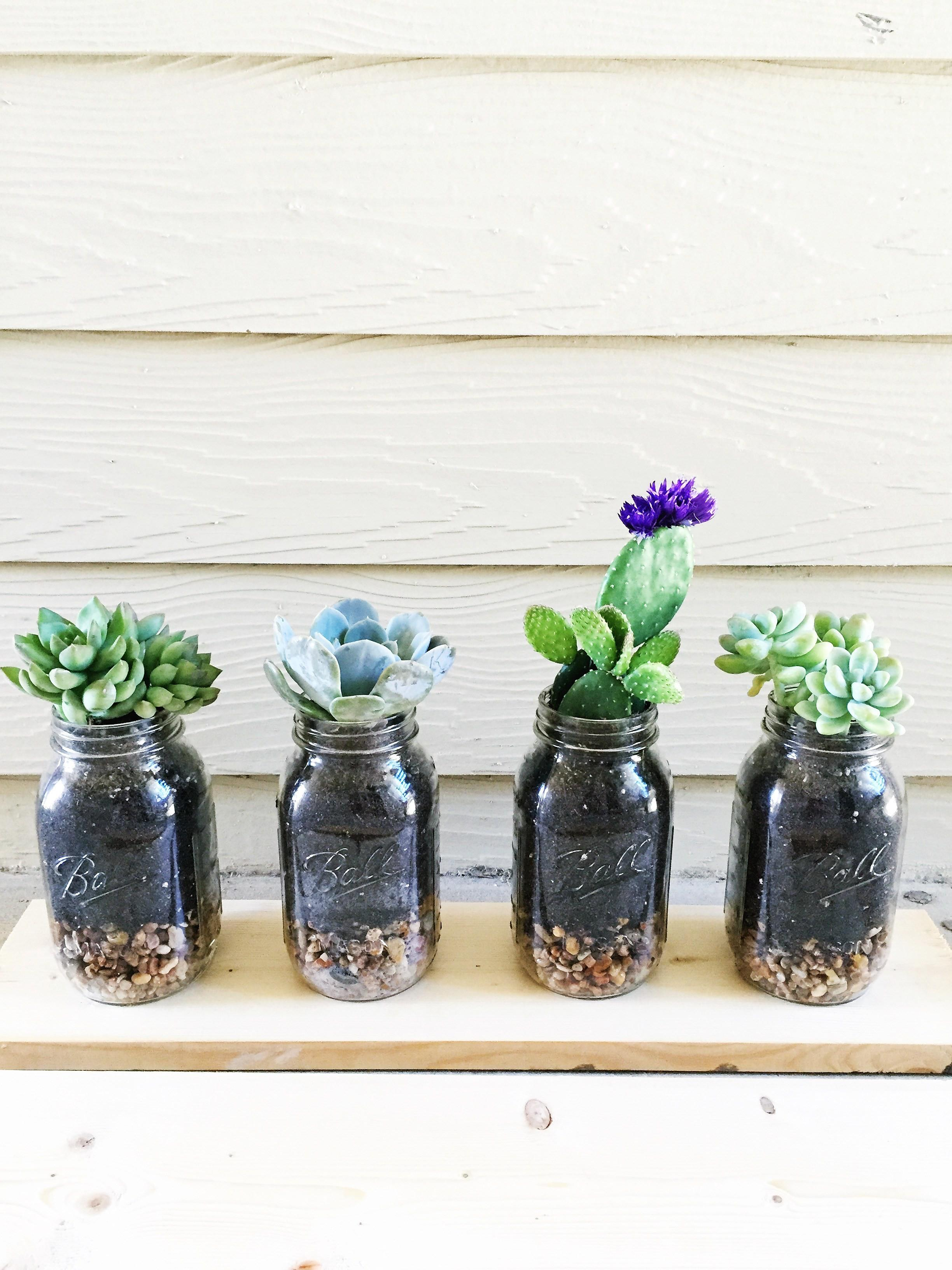 Diy Mason Jar Succulents Town Lifestyle Design
