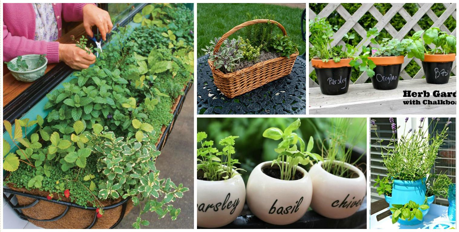 Diy Mini Herb Garden Instantly Draw Your Attention
