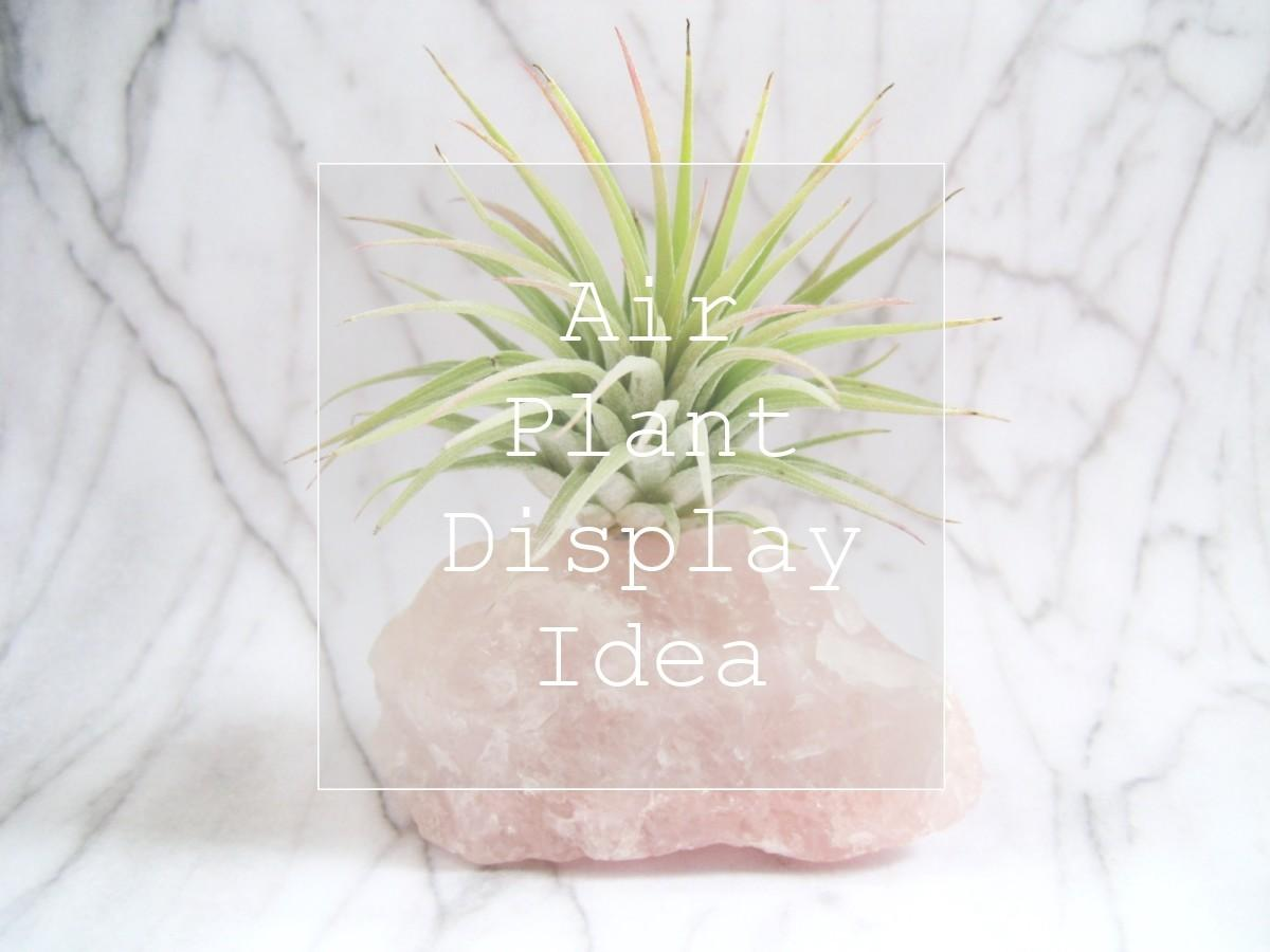Diy Plants Rock Air Plant Display Idea Adorablest
