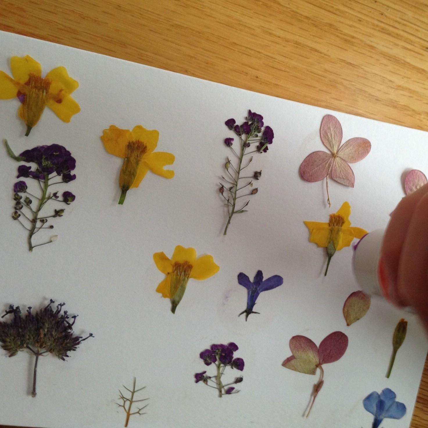 Diy Pressed Flower Notecards Everlongardener