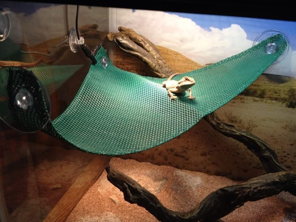 Diy Reptile Habitat Additions Save Your Wallet