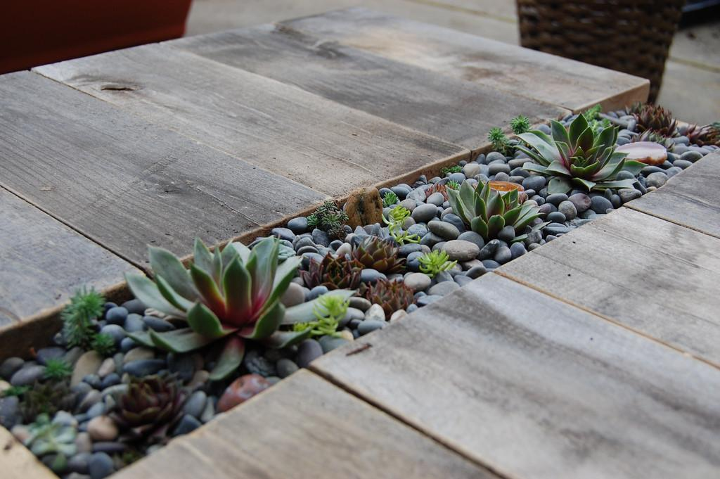 Diy Succulent Table Know Mom