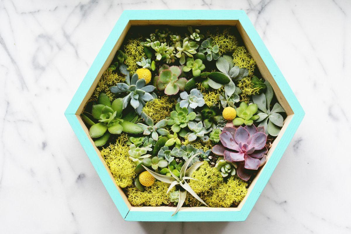 Diy Succulent Wall Planter Closer Home Decorating Trends