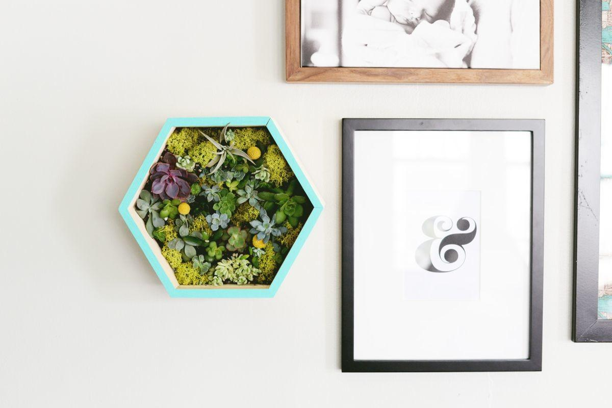 Diy Succulent Wall Planter Project Home Decorating