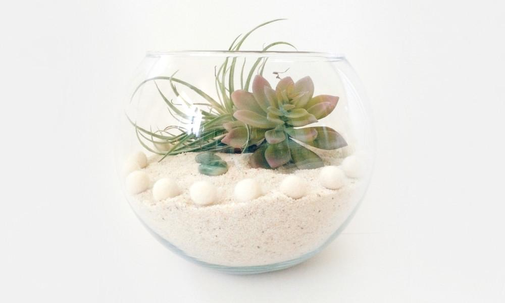 Diy Terrarium Archives Kraft Mint Blog