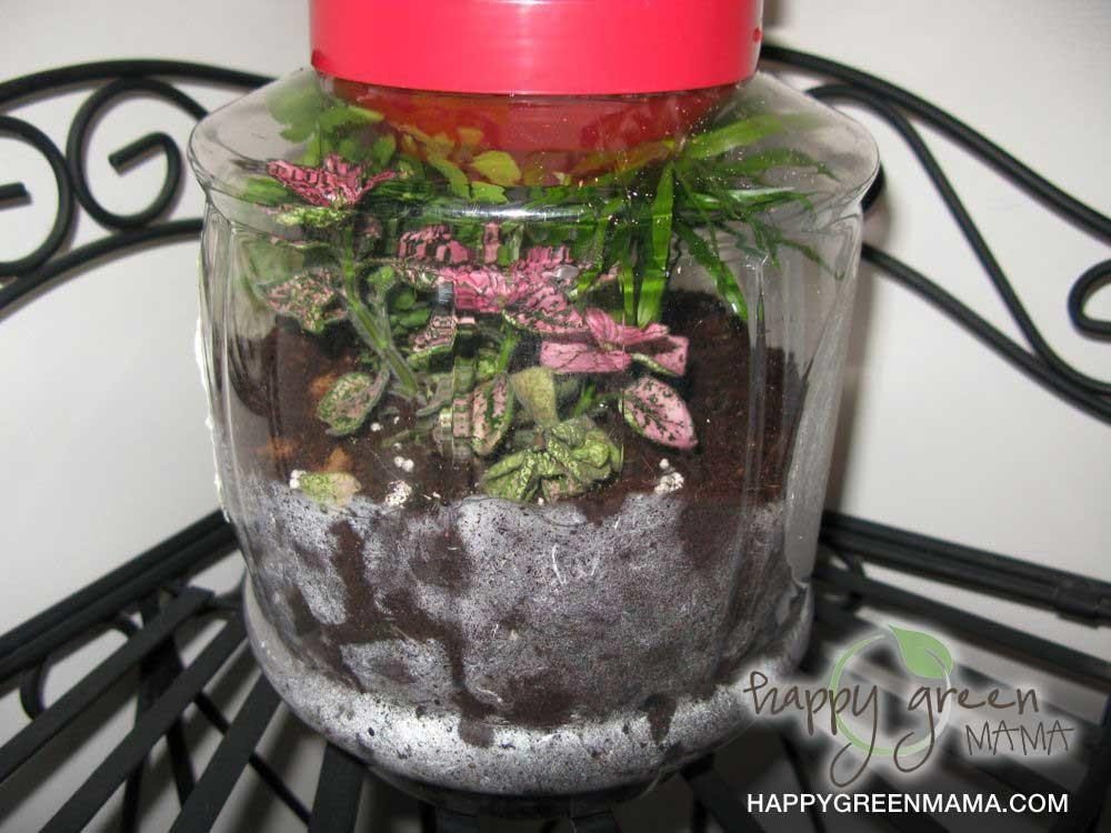 Diy Terrariums Green Crafts Kids Learning Eco