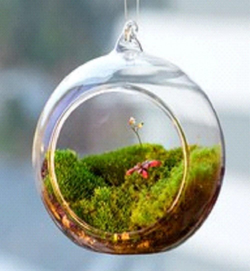 Diy Terrariums One Most Popular Terrari