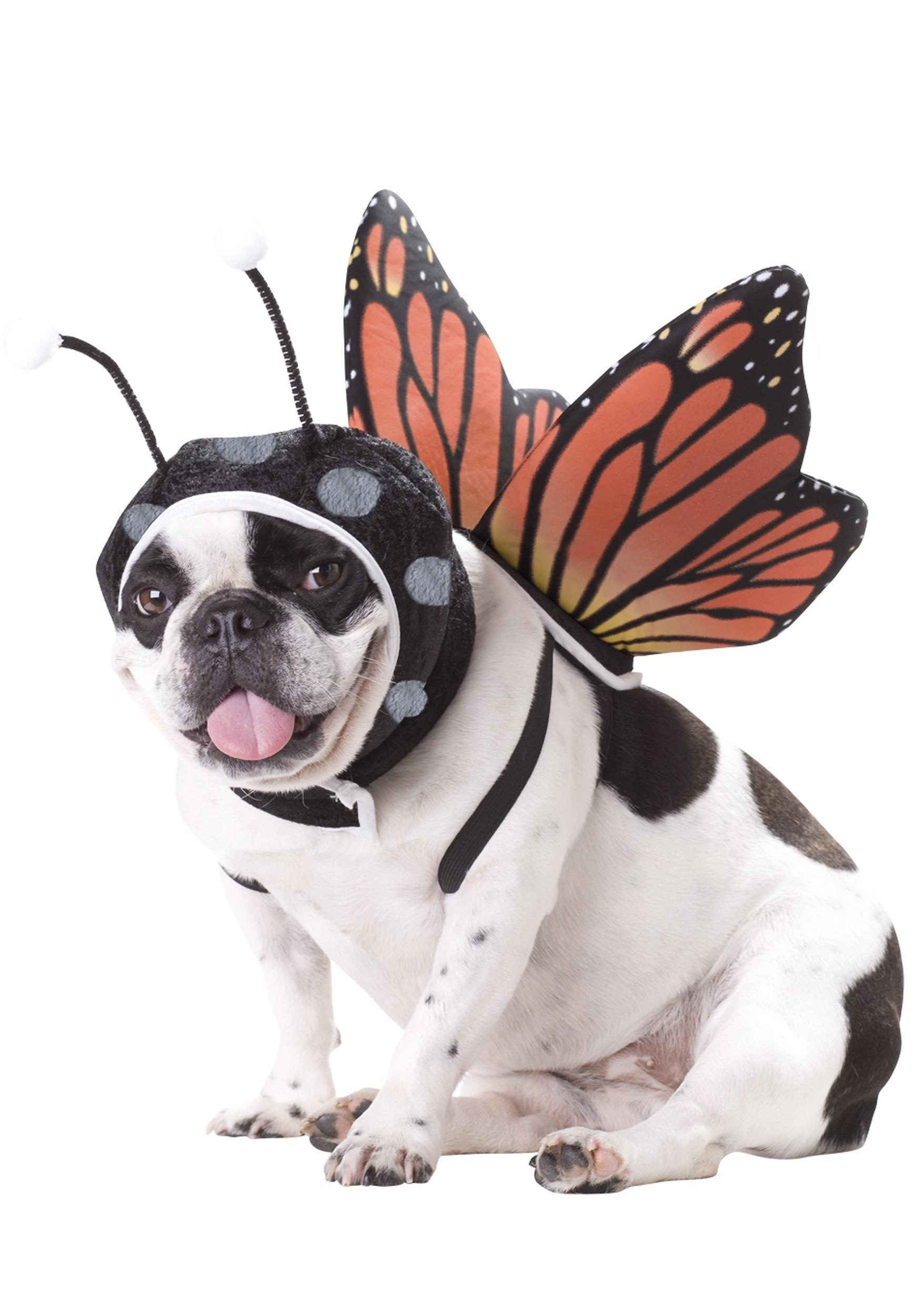 Dog Butterfly Costume Halloween Costumes Pets