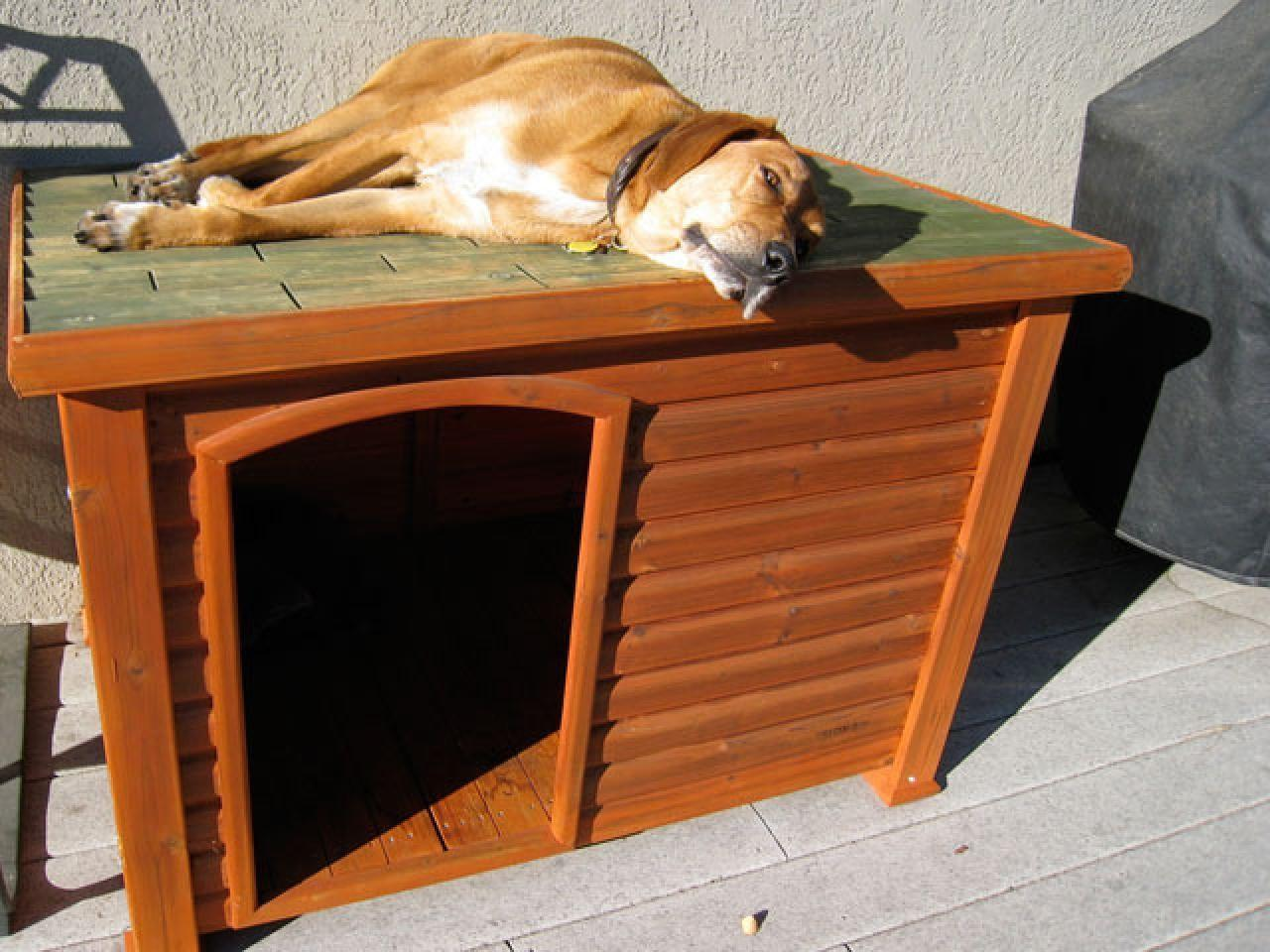 Dog House Plans Hinged Roof Breeds