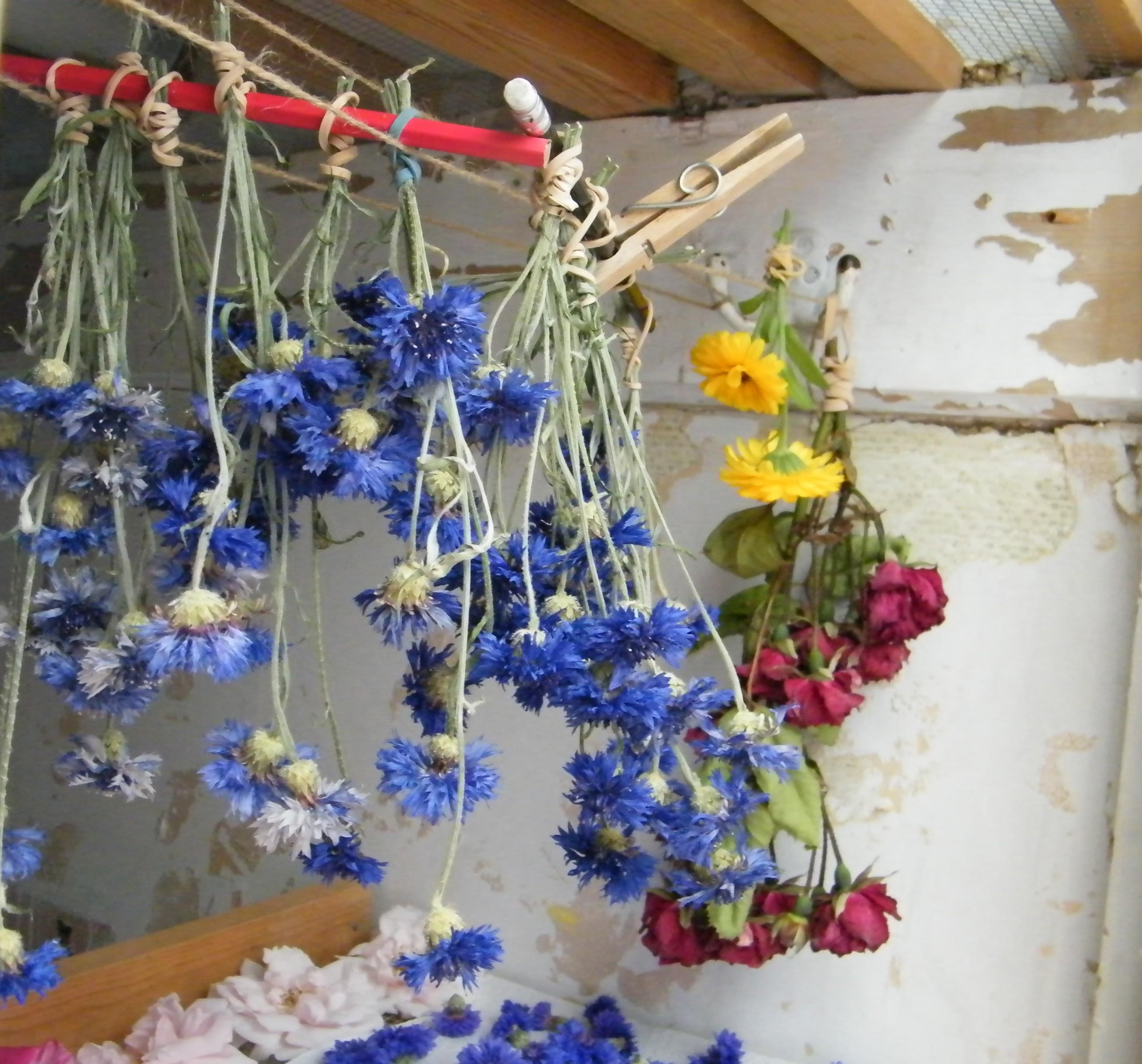 Don Need Airing Cupboard Dry Flowers Dried