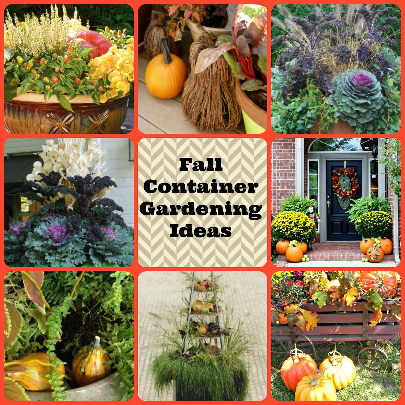 Dorothy Sue Millie Too Fall Container Gardening