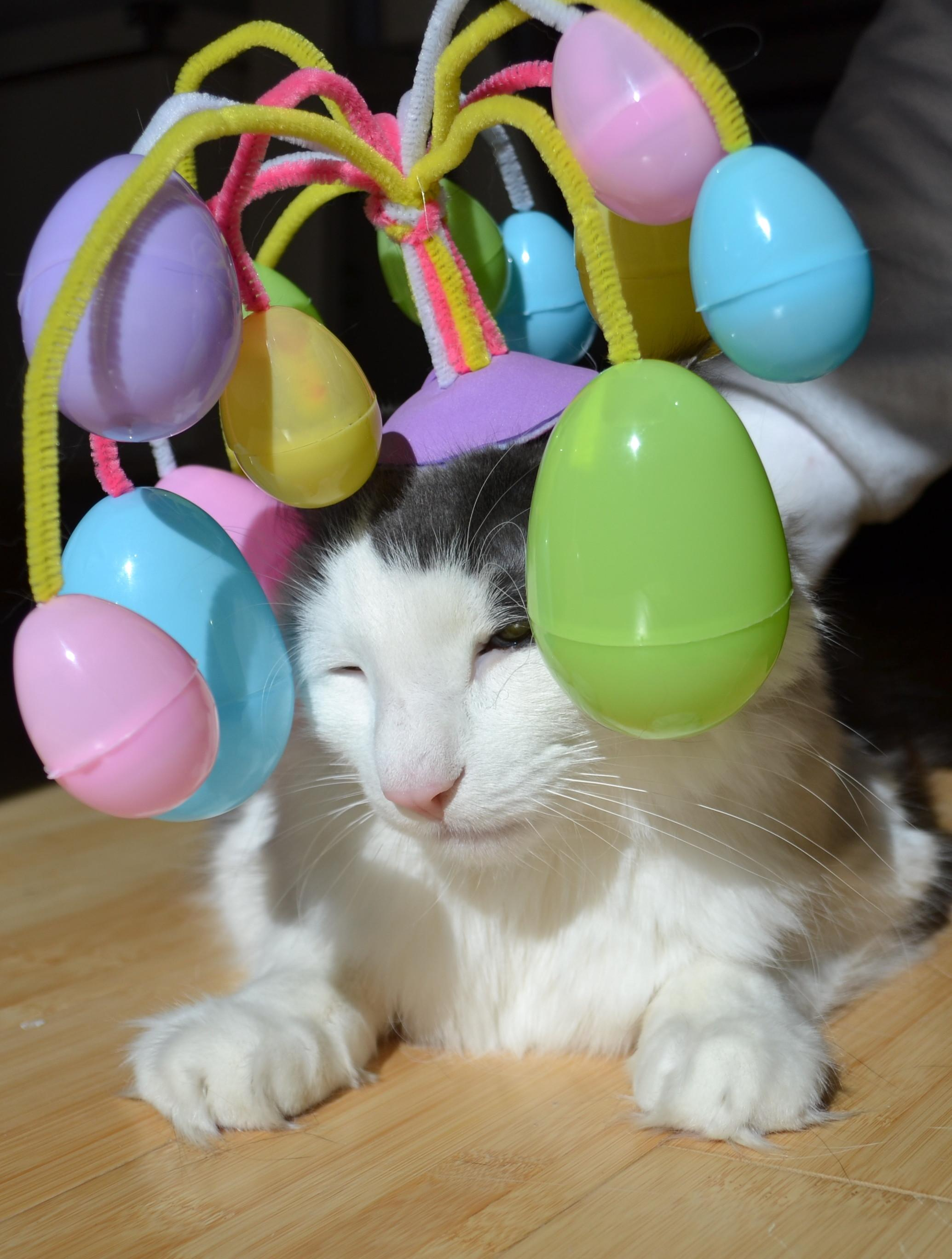 Easter Cat Funny Hat Tale Poor Fluffy