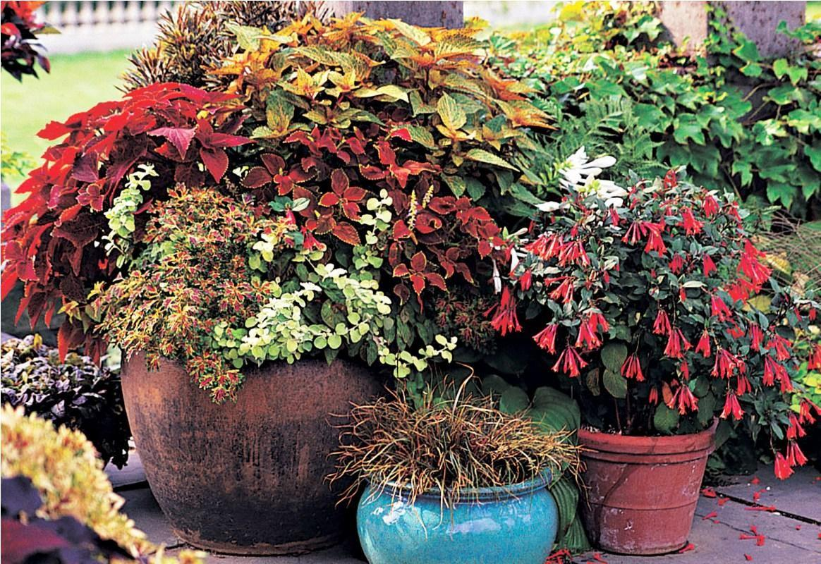 Easy Container Gardening Ideas Fall Emerson