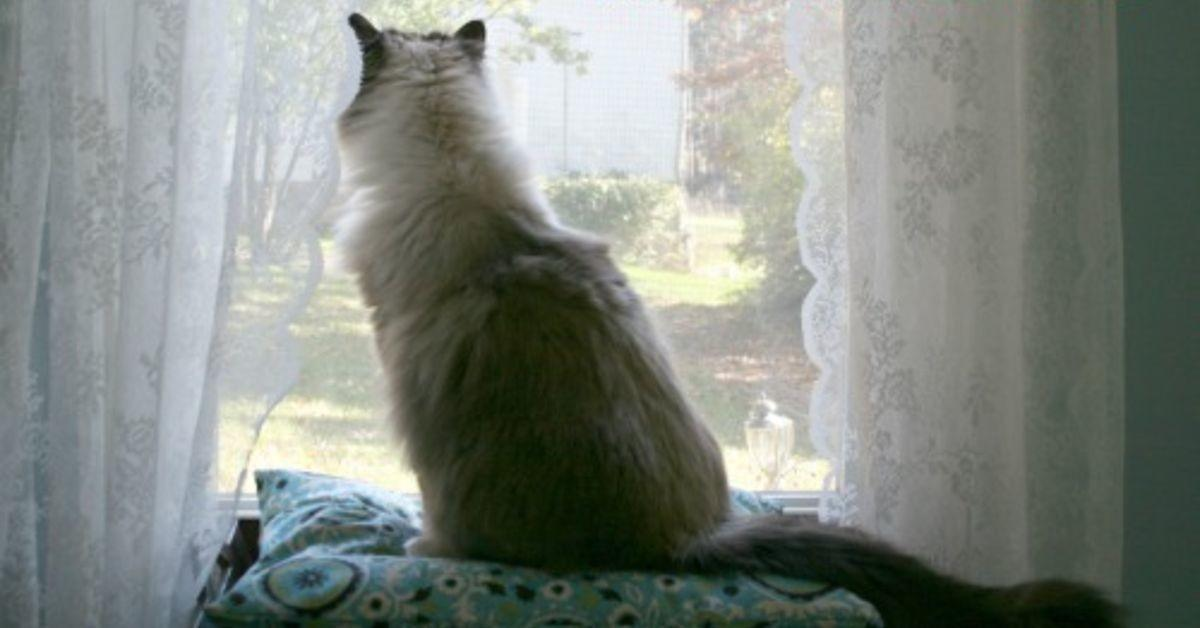 Easy Diy Cat Perch Window Seat Hometalk