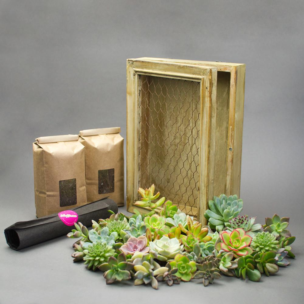 Easy Diy Succulent Living Frame Kit Juicykits