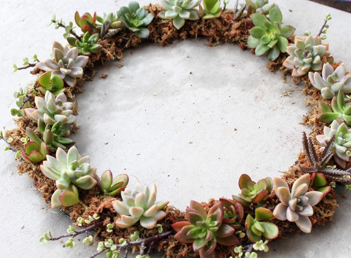 Easy Diy Succulent Wreath