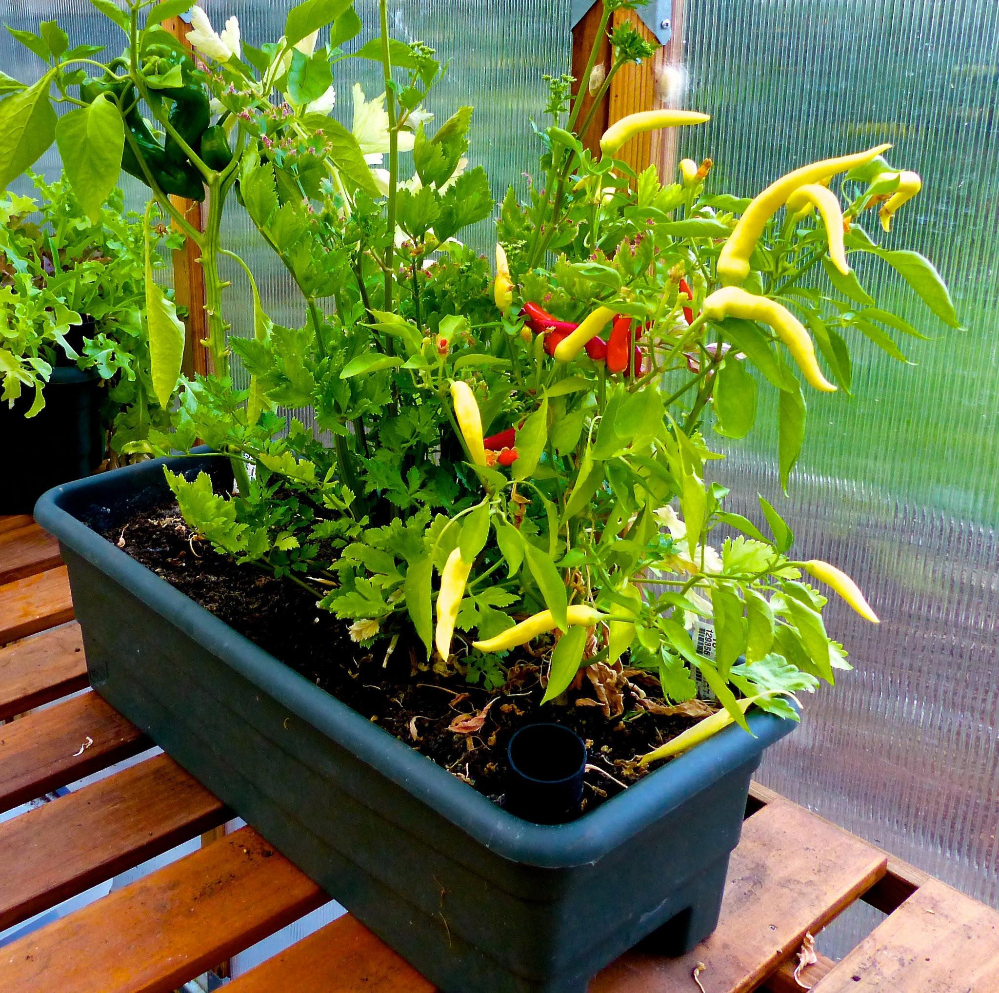 Essential Guide Container Vegetable Gardening Grow