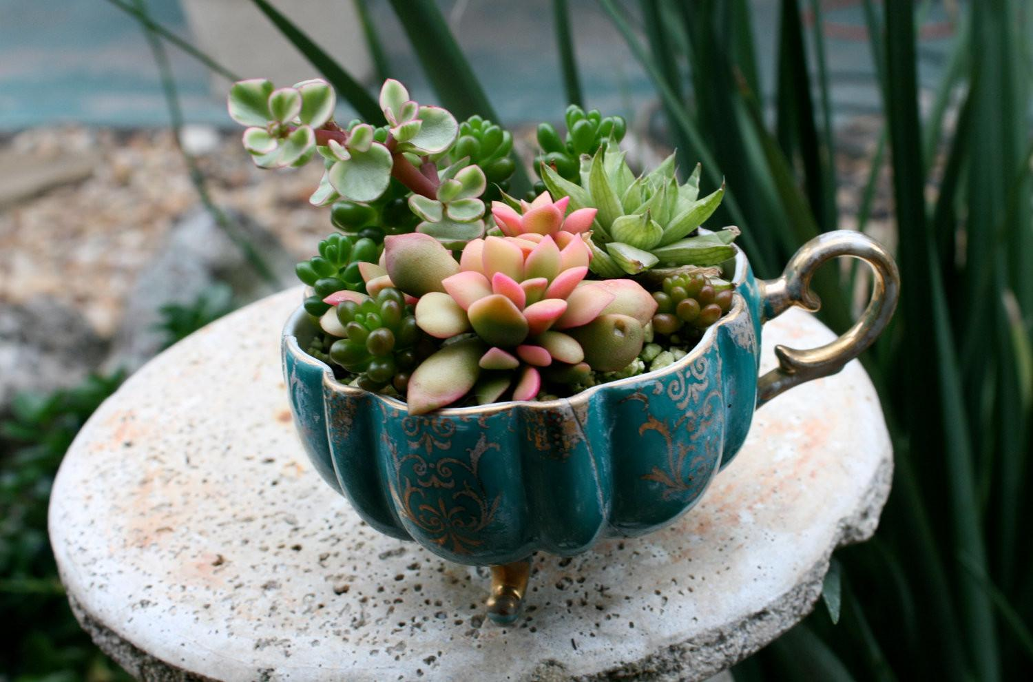 Everything Need Know Succulents Better