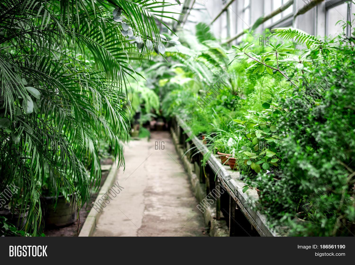 Exotic Green Plants Old Orchard Bigstock