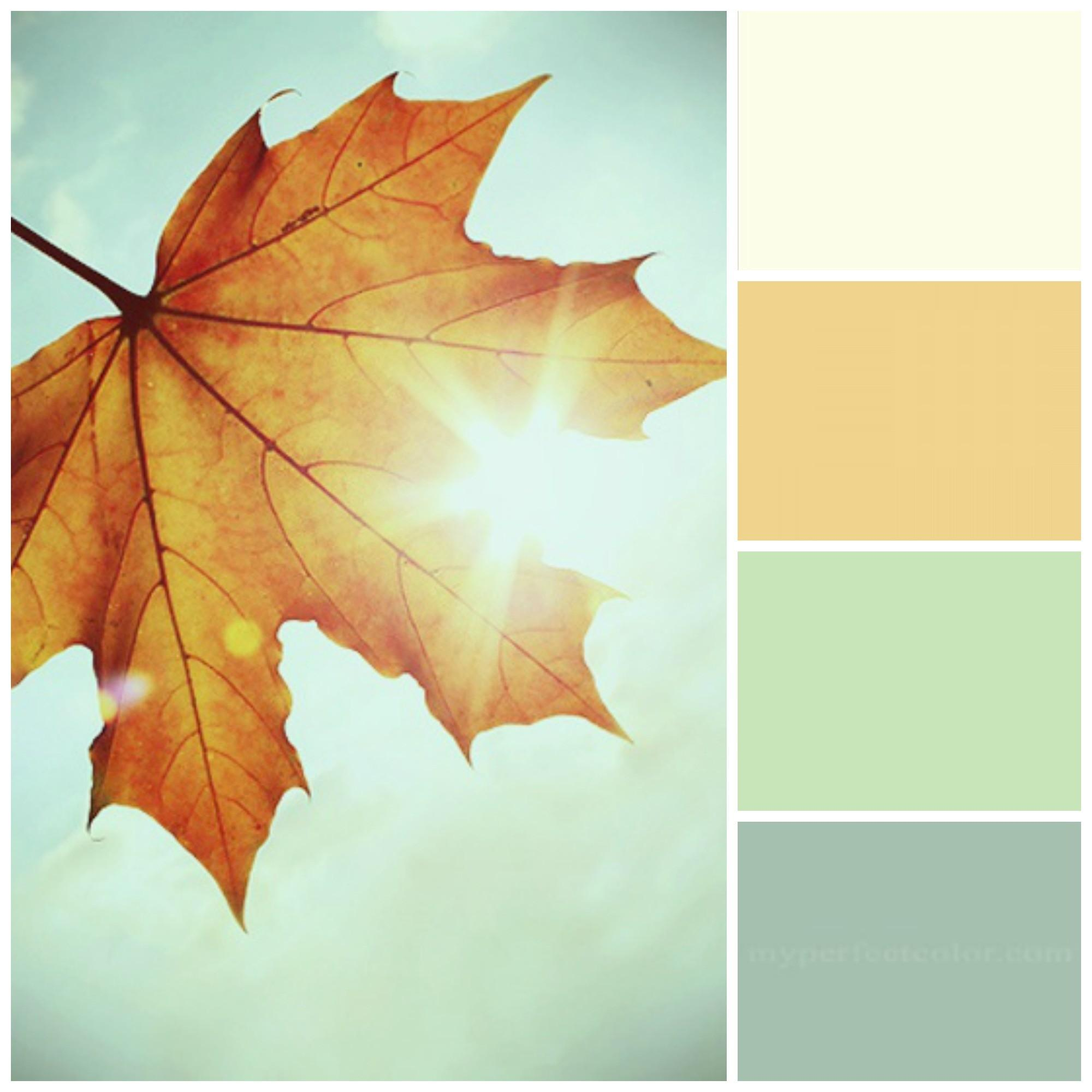 Fall Color Pallette Inspired Nature